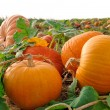 Pumpkins on a field — Stock Photo #4305447