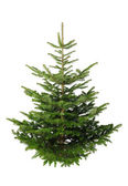 Christmas tree without ornaments — Stock Photo