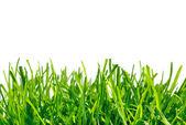 Dikke gras op witte achtergrond — Stockfoto