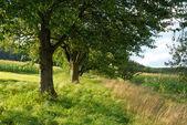 Beautiful green countryside — Stock Photo