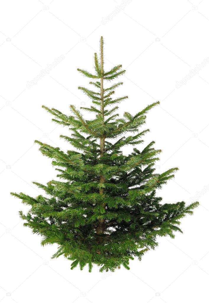 christmas tree without ornaments stock photo 169 smileus christmas tree without ornaments stock images royalty