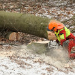 Lumberman felling an old tree — Stock Photo