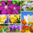 Colorful set of 7 flower shots — Stock Photo