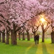 Magnificent springtime scenery — Stock Photo