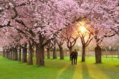 Magnificent springtime scenery — 图库照片