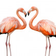 Two beautiful flamingos in love — Stock Photo