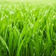 Fresh grass with dew drops — Stock Photo #4971102