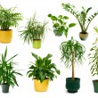 Eight different indoor plants in a set — Stock Photo #5111833