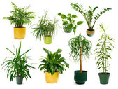Eight different indoor plants in a set — Stock fotografie