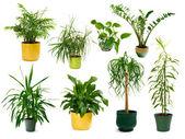 Osiem różnych rośliny rosnące w pomieszczeniach, w zestawie — Zdjęcie stockowe