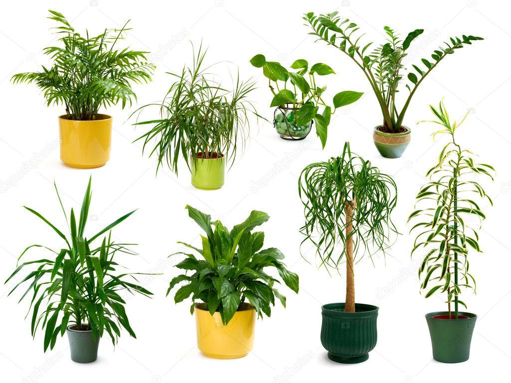 huit diff rentes plantes d 39 int rieur dans un ensemble photographie smileus 5111833. Black Bedroom Furniture Sets. Home Design Ideas