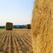 Landscape with hay roll — Stockfoto