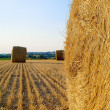 Landscape with hay roll - Stock Photo