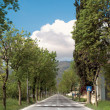 Stock Photo: Boulevard trees