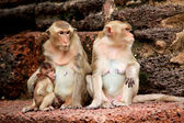 обезьяна в любви — Стоковое фото