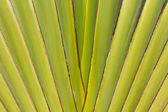 Streszczenie tekstura centrum bananowca wynika — Zdjęcie stockowe