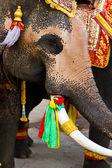 Elephant close up — Stock Photo