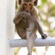 Monkeys cute sitting on a steel fence — Stock Photo