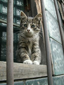 Gray kitten sits on the window — Stock Photo