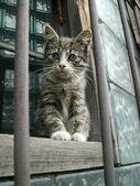 Gray kitten sits on the window — Stock Photo