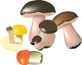 Vector mushrooms on a white background. — Stock Vector