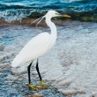 Royalty-Free Stock Photo: White heron
