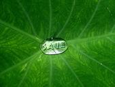 économiser l'eau — Photo