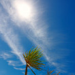 Royalty-Free Stock Photo: Palms, blue sky and sun