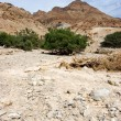 National Park Ein Gedi — Foto Stock