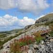 Karst-landscape region Burren — Stock Photo