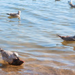Seagull en vis — Stockfoto