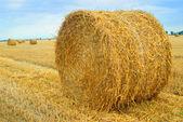 Fältet med halm balar — Stockfoto