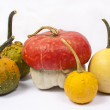 Five different pumpkins - Stock Photo