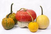 Five different pumpkins — Stock Photo