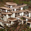 Inedible mushrooms — Stock Photo