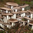 Stock Photo: Inedible mushrooms