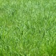 Just fresh green grass — Stock Photo