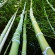 Stock Photo: Bamboo bottom-up