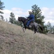 Stock Photo: Endurance riding wild breed