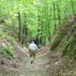 Walking old Natchez Trace - Stock Photo