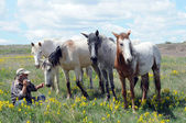 Mustang espanhol com fotógrafo — Foto Stock