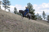 Endurance riding wild breed — Stock Photo