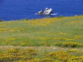 Wildflowers meet ocean — Stock Photo
