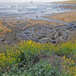 Elephant seals with wildflowers — Stock Photo