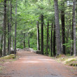 Maine carriage road - Stock Photo