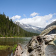 Stock Photo: Avalanche lake stump