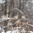 Sparrows on tree — Stock Photo #4842647