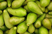 Many avocado — Stock Photo