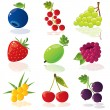 Stock Vector: Berries