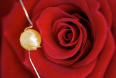Red rose with pearl — Stock Photo